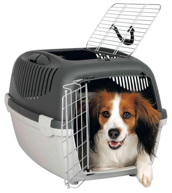 200107_PHO_PRO_DOG_CLIP_39861-1