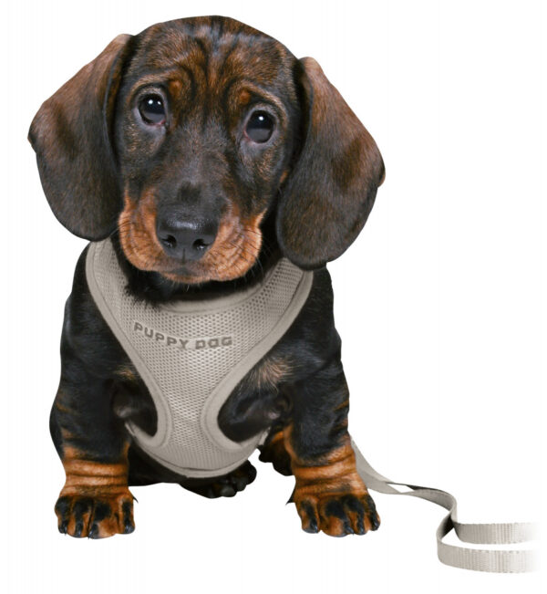 237896_PHO_PRO_DOG_CLIP_15560-1